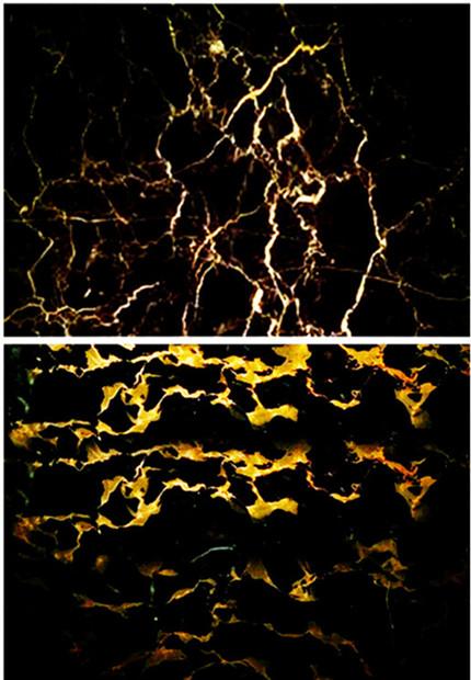 简介     英文名称(portopo),黑金花大理石有美丽的颜色,花纹,有较